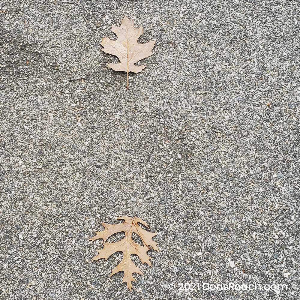 Leaves Fall by Doris Roach 8